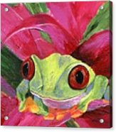 Ruby The Red Eyed Tree Frog Acrylic Print