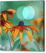 Rudbeckia Acrylic Print