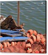 Ruddy Turnstones Perching On Fishing Nets Acrylic Print