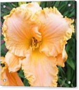 Ruffled Day Lily Acrylic Print