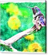 Ruffled Hummingbird - Digital Paint 5 Acrylic Print
