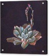 Ruffles In Bloom Acrylic Print