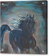 Run Horse Run Acrylic Print