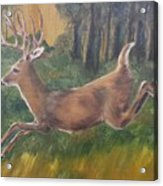 Running Buck Acrylic Print