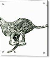 Running Cheetah Acrylic Print
