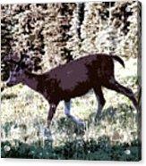 Running Deer Acrylic Print