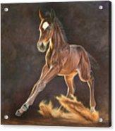 Running Foal Acrylic Print
