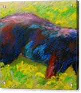 Running Free - Black Bear Cub Acrylic Print