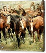 Running Free Horses IIi Acrylic Print