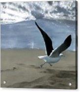 Running Gull Acrylic Print