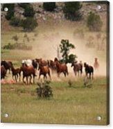 Running Herd Acrylic Print