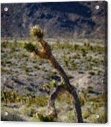 Running Man, Death Valley Acrylic Print