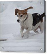 Running Through The Snow Acrylic Print