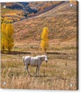 Rural Colorado  Acrylic Print
