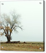 Rural Pasture And Tree Acrylic Print