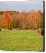 Rural Scene Acrylic Print