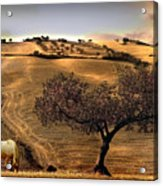 Rural Spain View Acrylic Print
