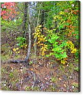 Rural Tyler County Landscape Acrylic Print by Terry  Wiley