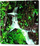 Rushing Stream El Yunque National Forest Mirror Image Acrylic Print