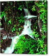 Rushing Stream El Yunque National Forest Acrylic Print