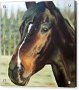 Russian Horse Acrylic Print