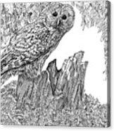 Russian Owl Acrylic Print