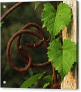 Rust Vine Acrylic Print