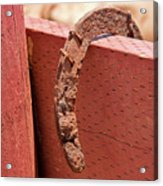Rusted Horseshoe Acrylic Print