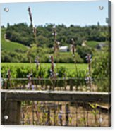 Rustic Fence In Wine Country Acrylic Print