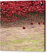Rustic Poppy Garden Acrylic Print