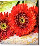 Rustic Red Dasies Acrylic Print