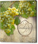 Rustic Vineyard - Chardonnay White Wine Grapes Vintage Style Acrylic Print