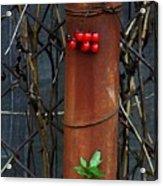 Rusty Fence Acrylic Print