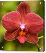 Rusty Orchid Acrylic Print