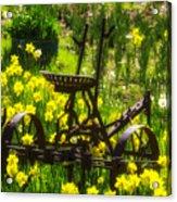 Rusty Plow In Daffodils  Acrylic Print