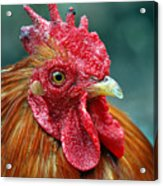 Rusty Rooster Acrylic Print