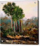 Sabal Palmettos Acrylic Print