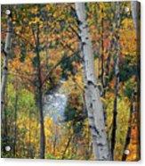 Saco River And Birches Acrylic Print