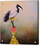 Sacred Ibis Lemon Pyramid Acrylic Print