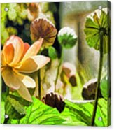 Sacred Lotus Painted Series Acrylic Print