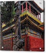 Sacred Millennium Tree Trunk Acrylic Print