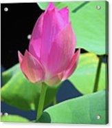 Sacred Pink Acrylic Print