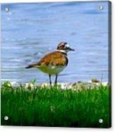 Sad Bird Near Pond Acrylic Print