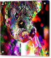 Sad Dog Acrylic Print by James Thomas
