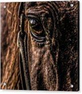 Sad Eyes Acrylic Print
