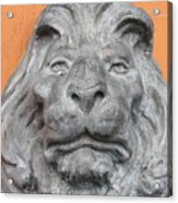 Sad Lion Acrylic Print