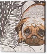 Sad Pup Acrylic Print