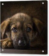 Sad Puppy Acrylic Print by Bob Nolin