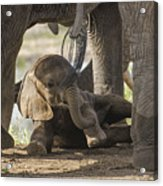 Safest Baby In Africa  Acrylic Print