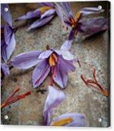 Saffron Flower Acrylic Print